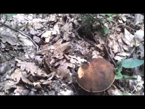 Il fungo che trattare seborrhea