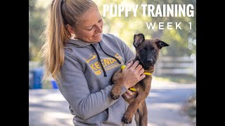 Puppy Training at 8 weeks with Xena