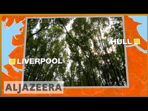🇬🇧 The UK's new forest plan: 50 million trees over 25 years   Al Jazeera English