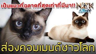 """ส่องคอมเมนต์ชาวโลก-เกี่ยวกับ""""แมวสยามหรือแมววิเชียรมาศ""""ว่าเขาจะชอบขนาดไหน"""