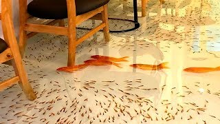 Enjoy a Cup of Coffee While Fishes Are Swimming Around Your Feet!