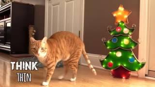 10 способов пережить рождество с кошками