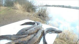 Правила рыболовства в ленинградской области 2020 река луга
