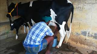 cow for sale in kerala olx - 免费在线视频最佳电影电视节目 - Viveos Net