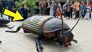 Как называют ученого который изучает насекомых