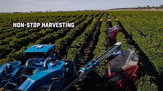 New Holland sets World Record for Non-Stop Grape Harvest