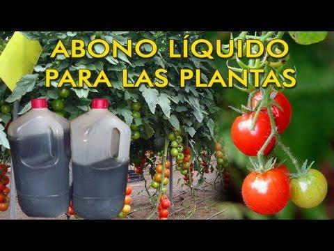 ABONO LÍQUIDO PARA TUS PLANTAS A PARTIR DE ESTIERCOL