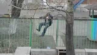 Die besten 100 Videos Meanwhile in Russia: Der Zaunkönig