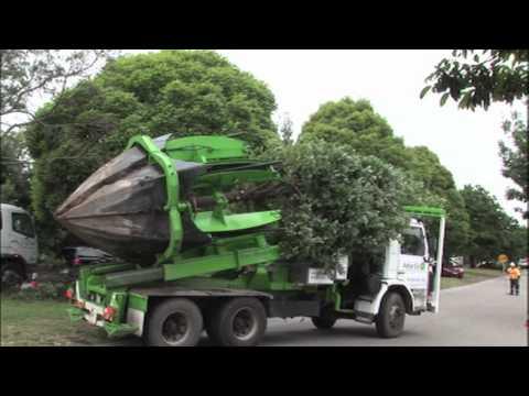 טכנולוגיה מדהימה להעתקת עצים