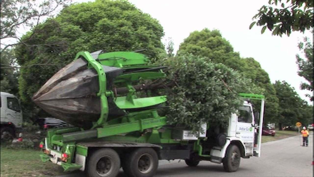 Truck-Mounted Claw Pulls Up Trees By The 6800kg Root Balls