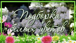 Сад белых цветов / Подборка 😍