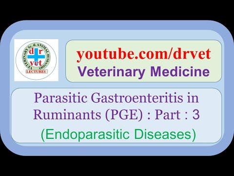 A marhahúsban található paraziták veszélyesek az emberre