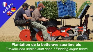 Planting sugar beets instead of sowing – reducing the time on weed control