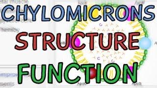 Lipoproteins - Chylomicron