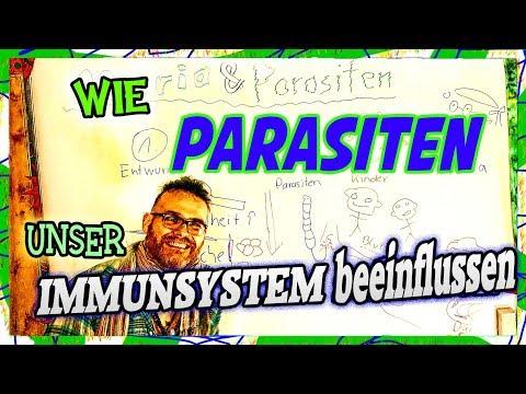 Wozu die Würmer die Würmer träumt