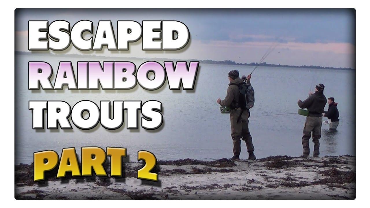 Angeln auf die ausgebrochenen Regenbogenforellen! Teil2