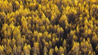 Lessov - Natura [Silk Music]