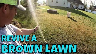 HOW TO REVIVE A BROWN DRY LAWN