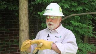 Oak Tree Trimming Guide