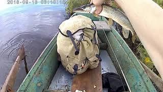 Клев рыбы в свердловской обл