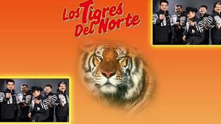 Corridos De Caballos Los Tigres Vs Huracanes Mix