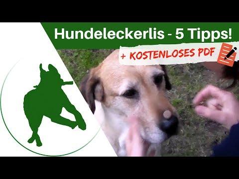 Welche Hundeleckerlis zum Belohnen? - 5 praktische Tipps!