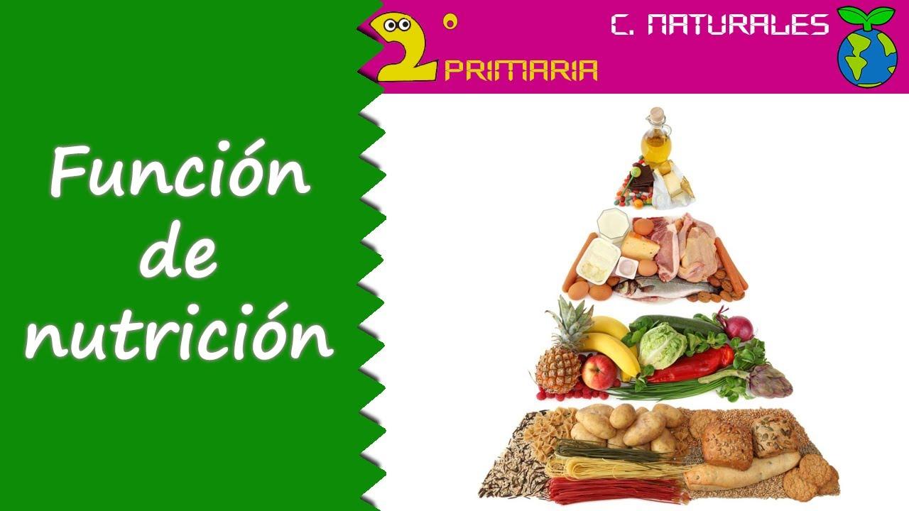 Ciencias de la Naturaleza. 2º Primaria. Tema 1. Función de nutrición