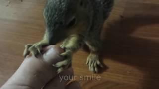 LUChShIE PRIKOLY IYuL 2016 Smeshnoe Video