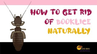 How to Get Rid of Booklice Naturally