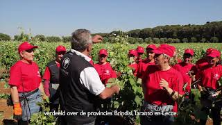 YouTube: Cantine Due Palme Salento Serre Susumaniello magnum