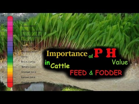Importance of PH (Potential Hydrogen) Value in Cattle Feed and Fodder | Ashwin Sawant
