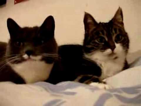 Kočky jako my