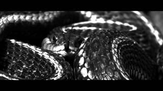 Dan Talevski - Guilty As Sin (Explicit Version)
