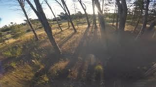 FPV RAW - FOREST