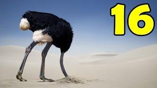 16 สัตว์ที่มีความเร็วไวที่สุดในโลก!! 321 กิโลเมตร/ชั่วโมง