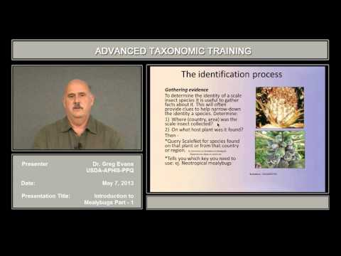 Introduction to mealybugs – part 1