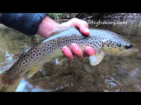 Fall Fly Fishing Small Creeks