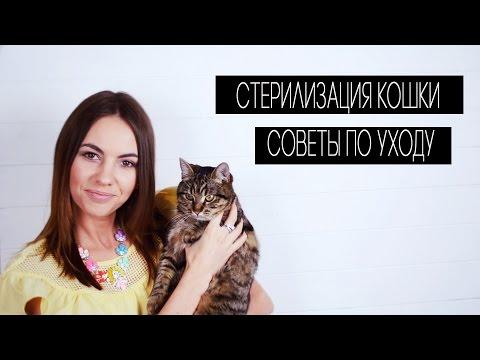 Стерилизация кошки . Советы по уходу