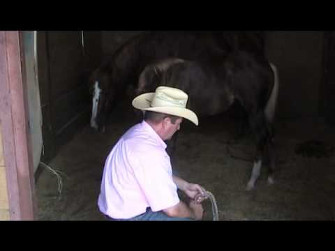Halter Training Clip 1