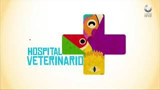 Hospital Veterinario - Programa 1