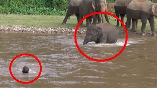 Download Video 7 Times ANIMALS SAVING HUMANS Caught On Camera | FUN2KNOW! MP3 3GP MP4