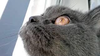 """Кошка говорит - ругается на птиц. А может кошка говорит """"Я люблю тебя птичка"""""""