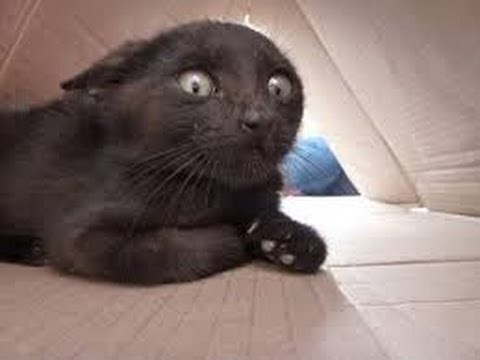Funny cats scared of random things – Funny cats compilation