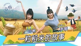 稻農李懿與小帆將稻米變成熟飯的故事【懿想天開EP47】FT.楊曉帆