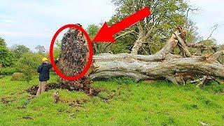 Przez 1000 lat nikt z wioski o tym nie wiedział! Znalezisko odkryto dopiero po huraganie!