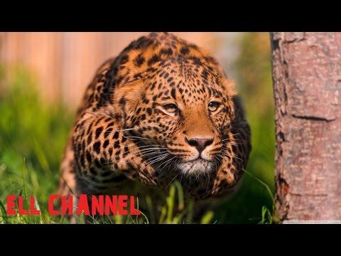 რეკორდსმენი ცხოველები (ვიდეო)