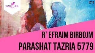 Parashá Tazria