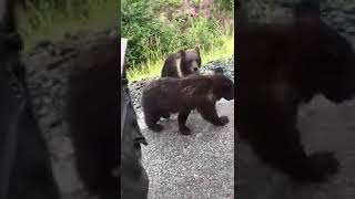 Man Decides To Pet A Bear Cub And Gets More Than He Bargained For