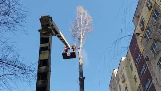 Пильшики пилят дерево на подвязах !!!