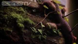 В Ботаническом саду МГУ зацвело дерево какао